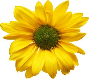 Цветя и растения